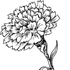Carnation clipart black svg free stock Simple Carnation Drawing | Free download best Simple Carnation ... svg free stock