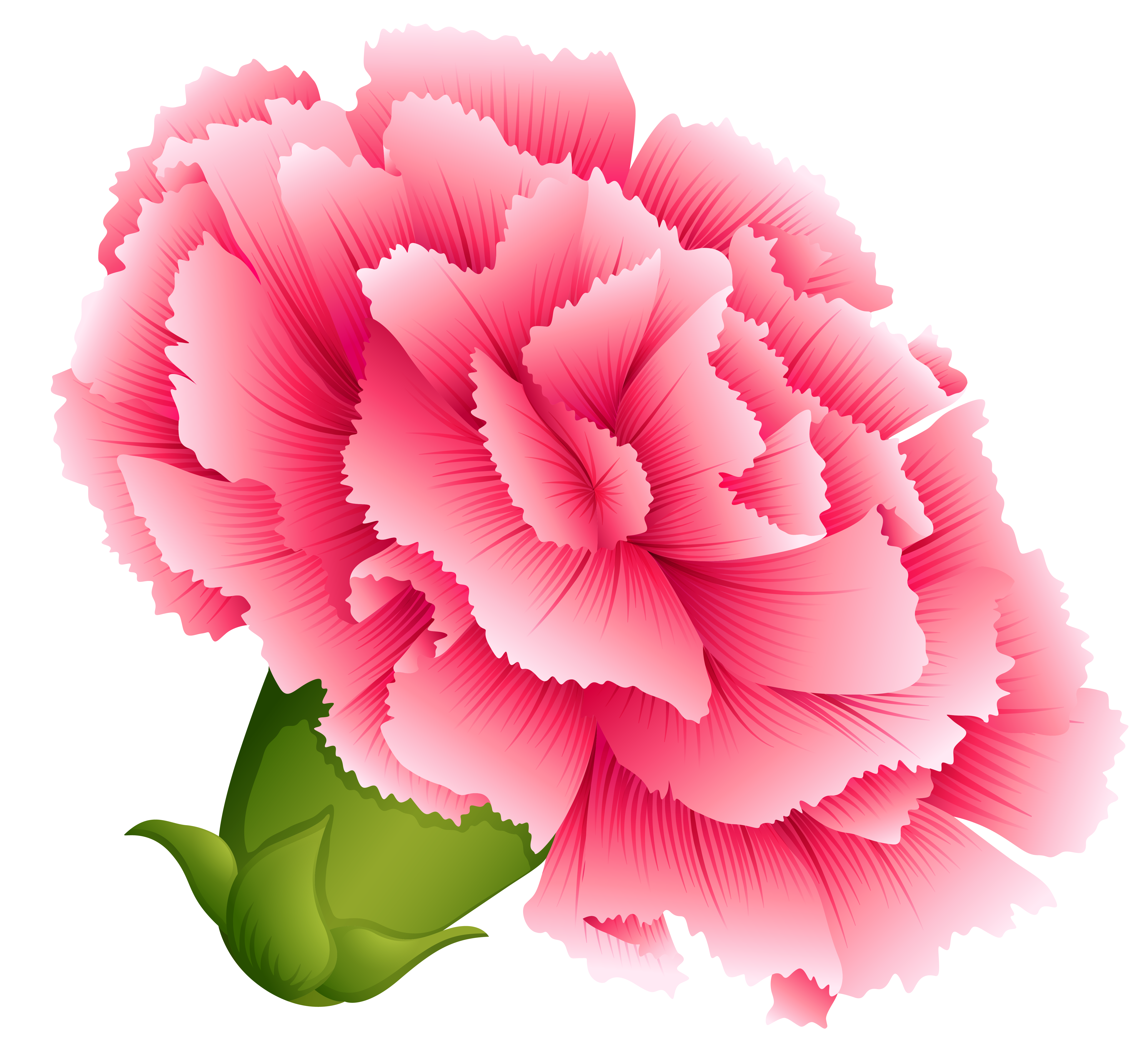 Carnation flower clipart picture library library Pink Carnation PNG Clipart Image   Gallery Yopriceville - High ... picture library library