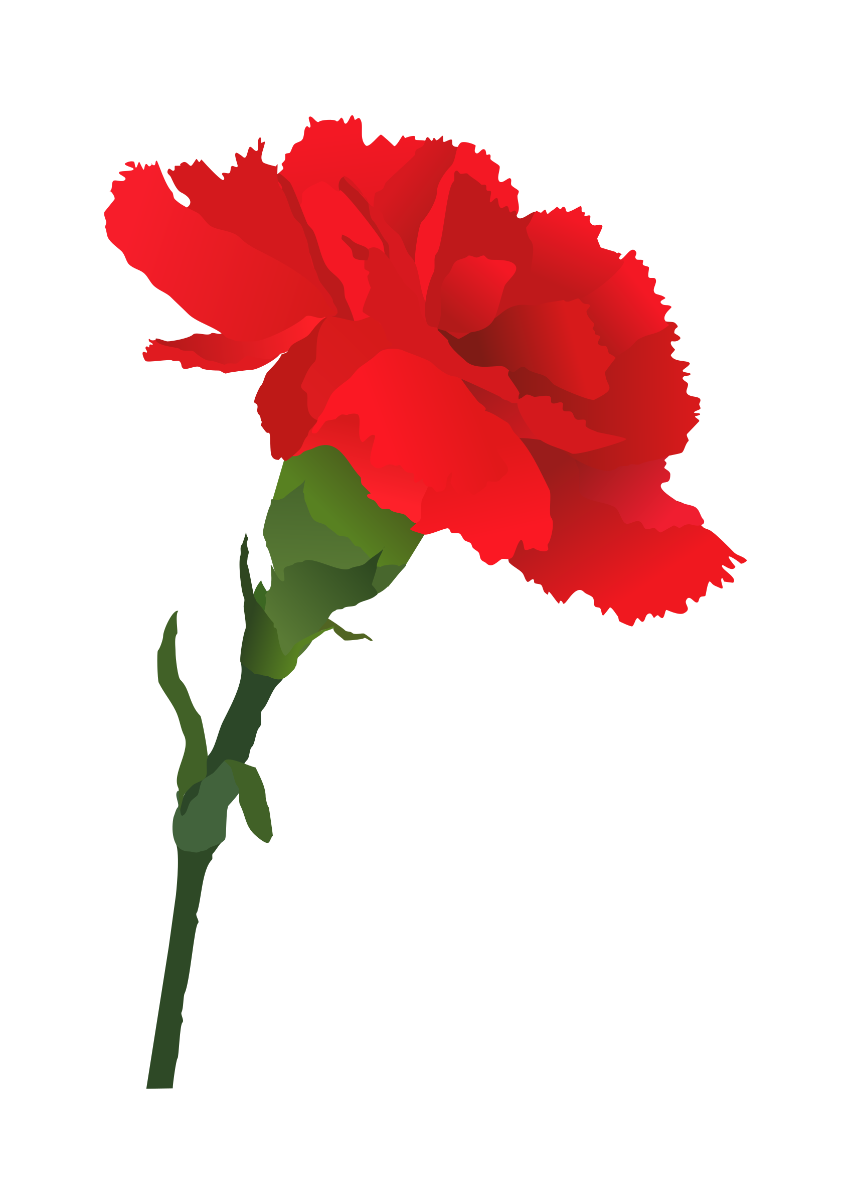 Spanish flower clipart clipart library stock Red Carnation | Displaying 20> Images For - Red Carnation Drawing ... clipart library stock