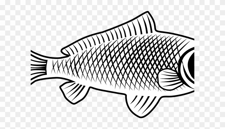 Carp Clipart Golden Carp - Tubo In Gomma Per Irrigazione - Png ... image black and white