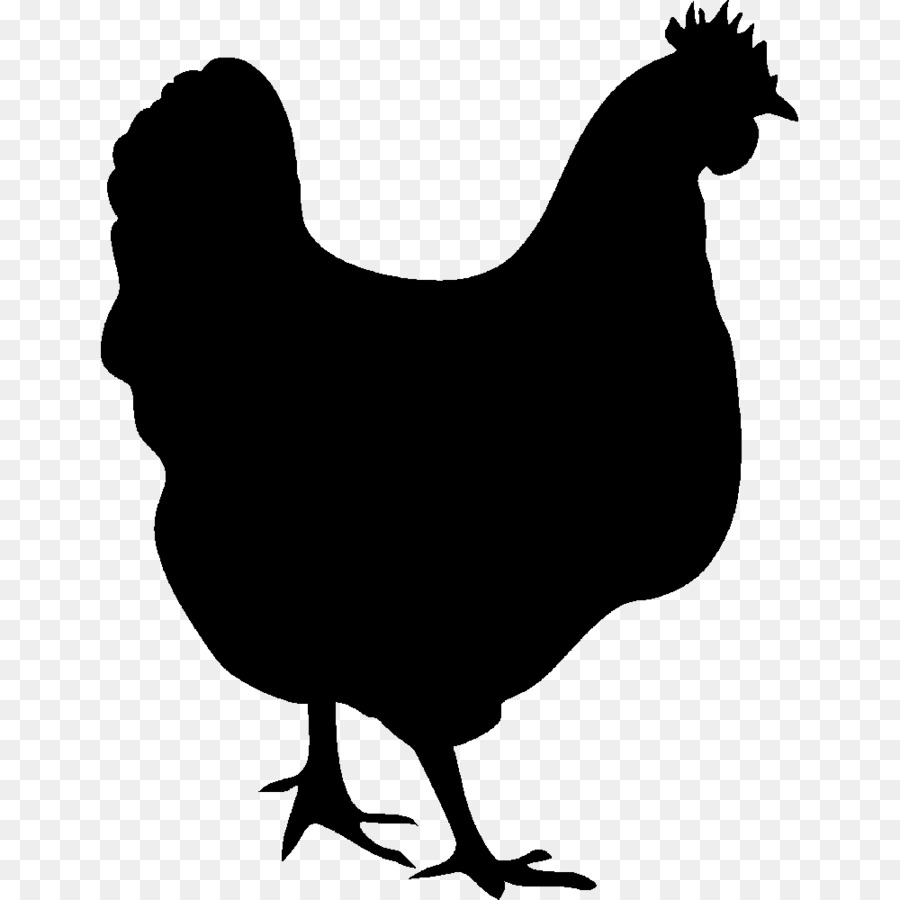 Cartoon chickens silhouette clipart freeuse Chicken Cartoon png download - 1000*1000 - Free Transparent Chicken ... freeuse