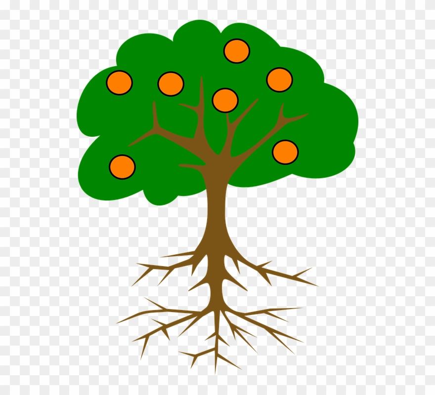 Collection Of Cartoon Orange Tree - Tree Drawing With Fruits Clipart ... clip