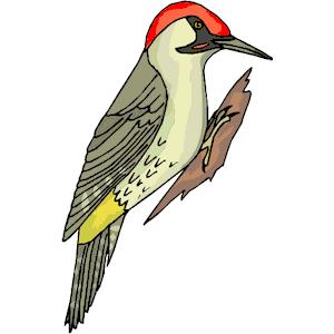 Cartoon woodpecker clipart transparent stock Woodpecker Clipart & Look At Clip Art Images - ClipartLook transparent stock