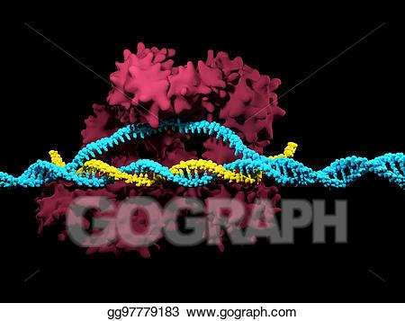 Clipart - Crispr-cas9. Stock Illustration gg97779183 - GoGraph clip transparent stock