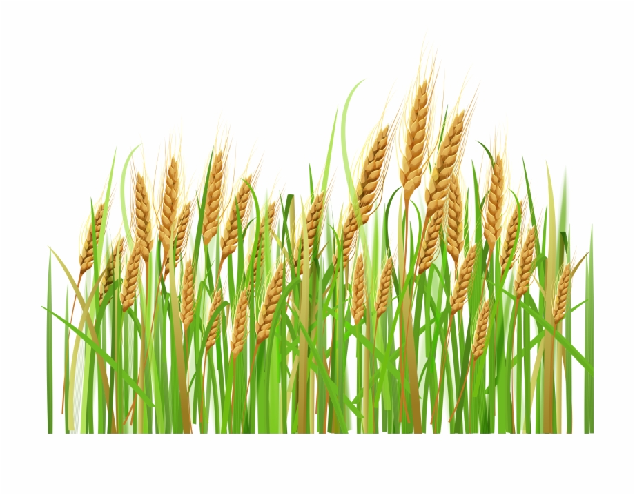 Cash crops clipart clip art Svg Download Ears Png Gallery Yopriceville High Quality ... clip art