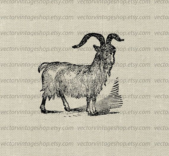 Cashmere clipart png royalty free library Goat Vector Clipart Instant Download, Horned Cashmere Goat Farm ... png royalty free library
