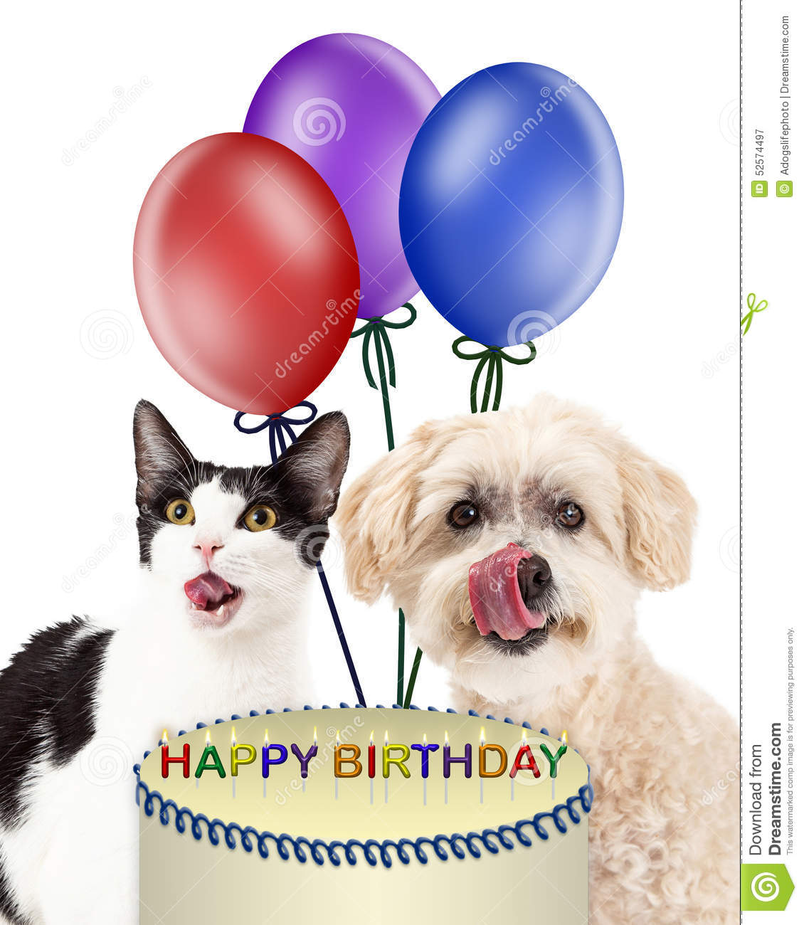 Cat and dog birthday party clipart free banner freeuse stock Happy Birthday Cats And Dogs — Lovely Meme banner freeuse stock