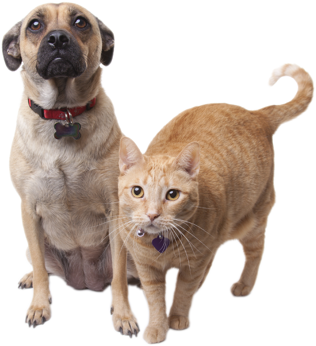 Dog and cat sleeping clipart png freeuse FAQs - Willamette Humane Society png freeuse