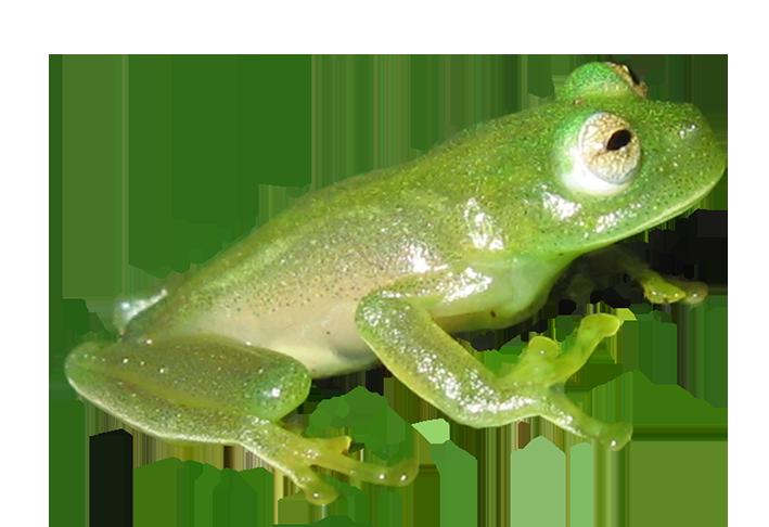Cat and frog clipart banner transparent Frog Clip Art banner transparent