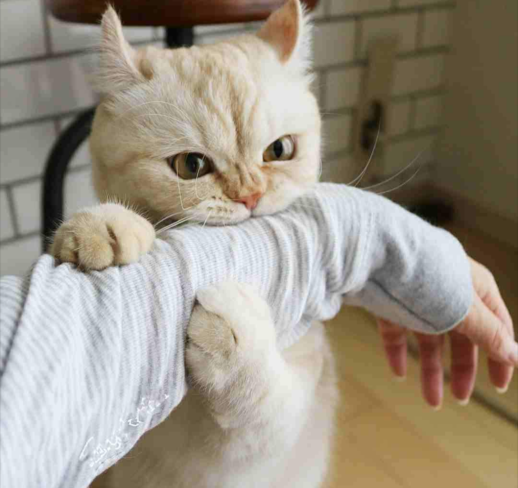 mew kitty moew cat bite cute - Image by devil otaku image transparent library