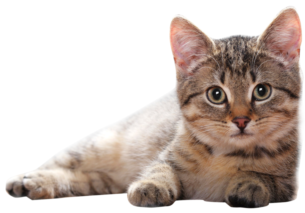 Cat phone clipart jpg stock Cat PNG Clipart - peoplepng.com jpg stock