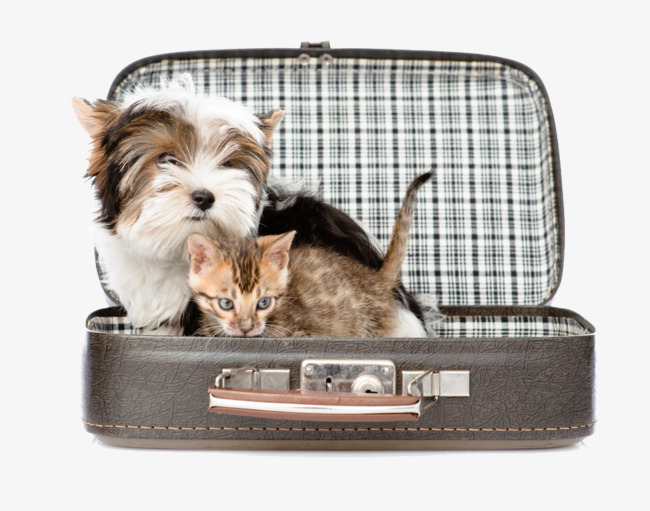 Cat In Suitcase Png Free & Free Cat In Suitcase.png Transparent ... jpg freeuse library