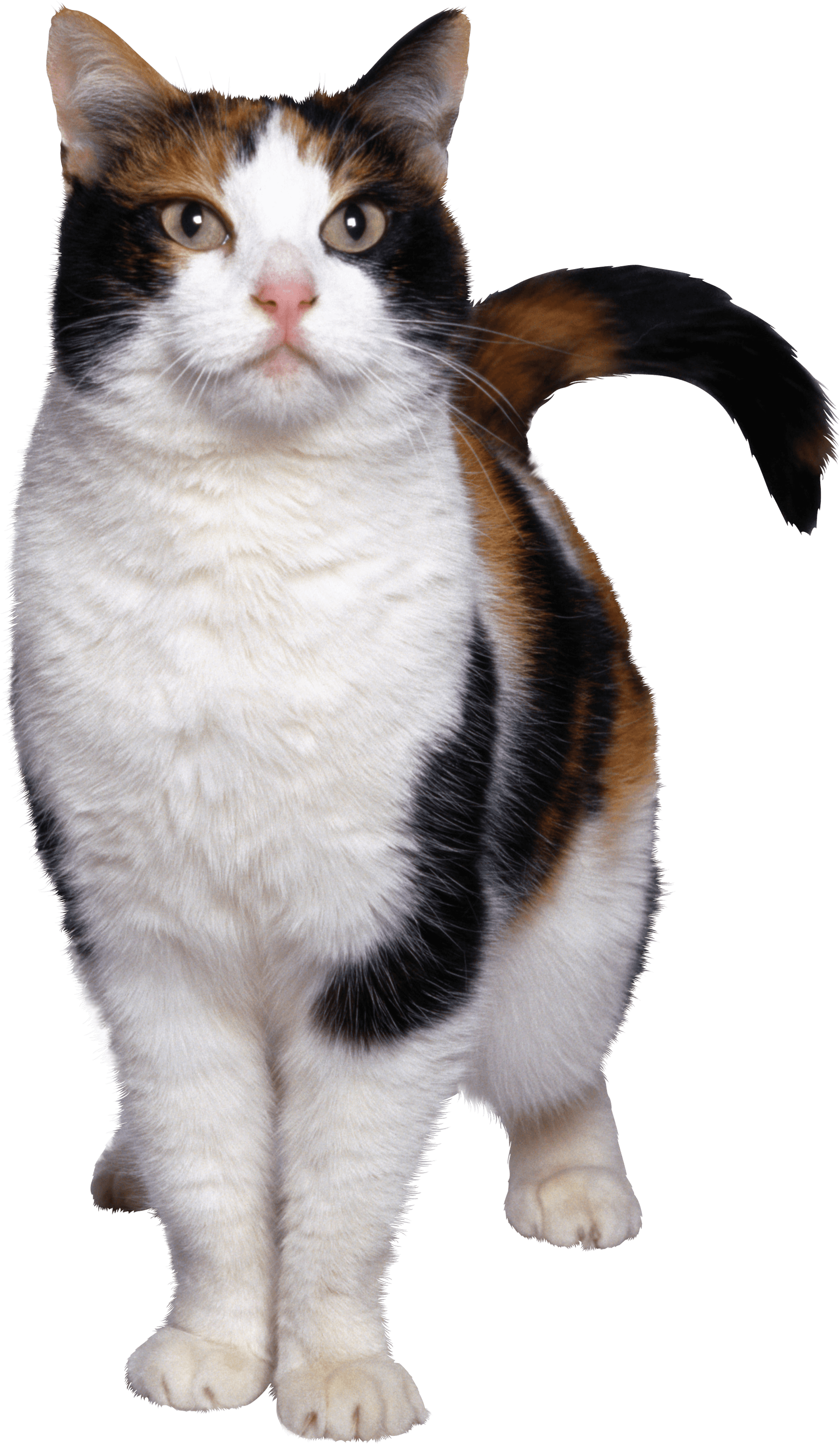 Cat clipart transparent background picture freeuse Cats transparent PNG images - Page2 - StickPNG picture freeuse