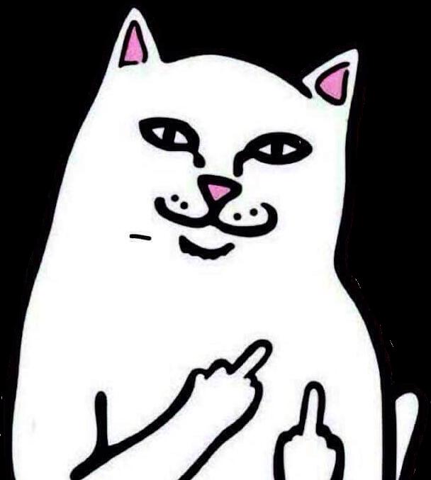 Cat clipart middle finger clip art library middlefinger cat cats funnycat meme memesfreetoedit... clip art library