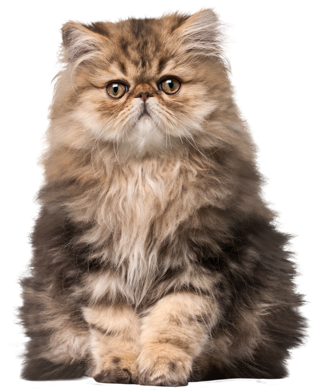 Persian cat clipart jpg royalty free Cat PNG Clip Art - Best WEB Clipart jpg royalty free