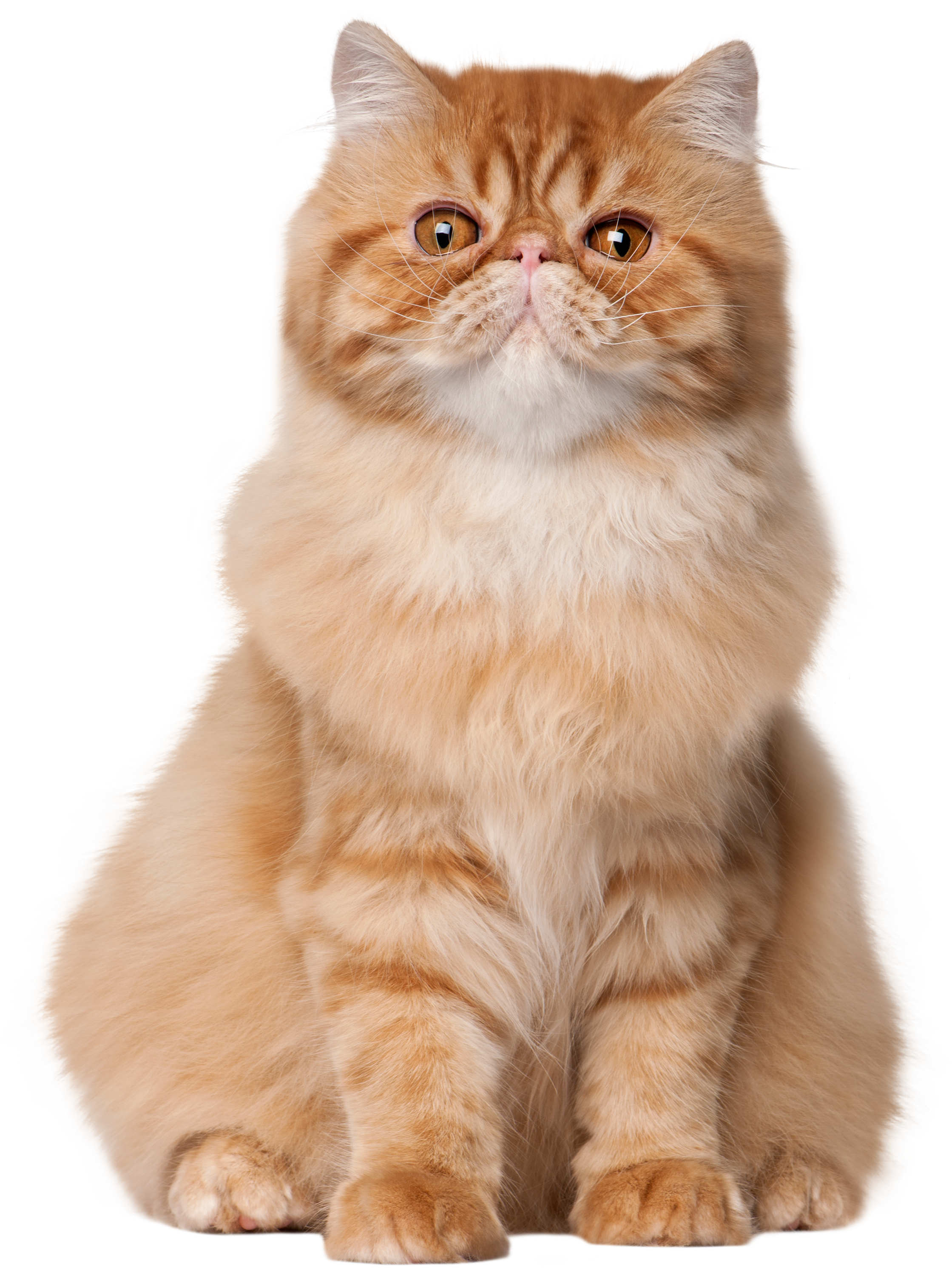 Cat clipart realistic banner library library Sitting Cat PNG Clip Art - Best WEB Clipart banner library library