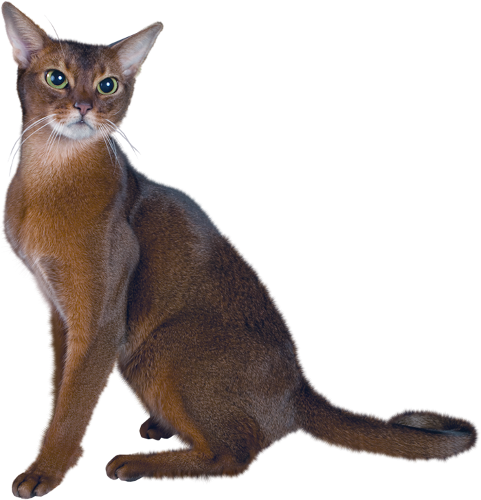 Realistic cat clipart picture free download 28+ Collection of Real Cat Clipart | High quality, free cliparts ... picture free download
