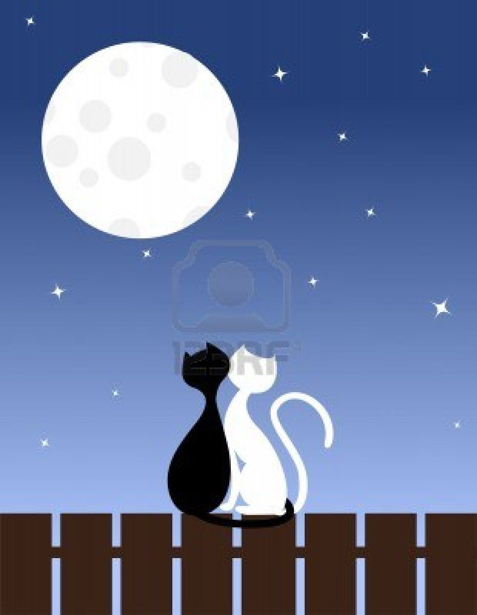Two enamoured cats sit on a fence | Cute Animals | Cat sitting, Cats ... png transparent stock