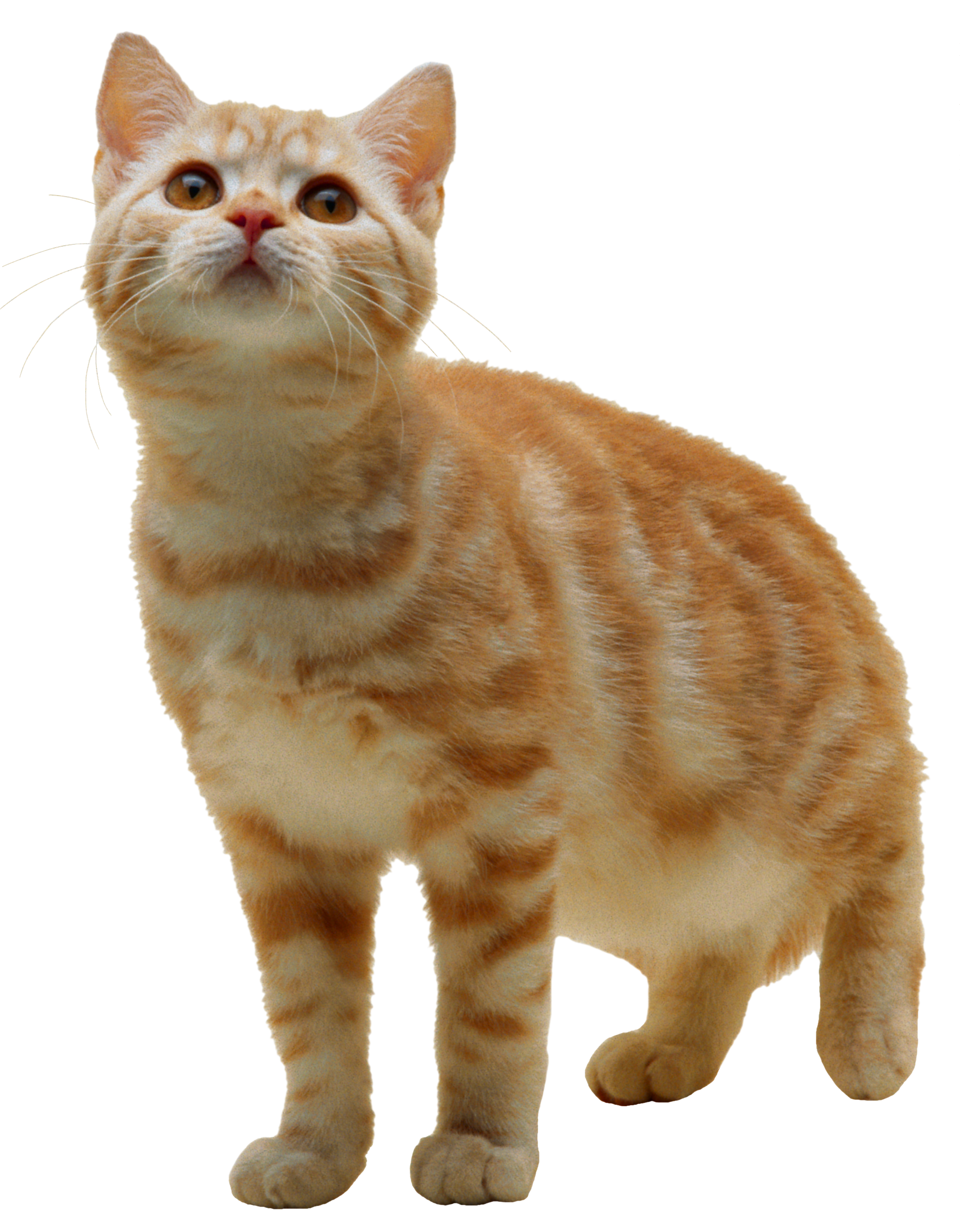 Clipart cat food banner free library Cat Png Want Food banner free library