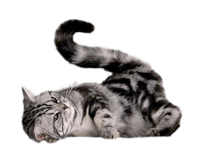Cat fur clipart clipart royalty free stock Playing Cat transparent PNG - StickPNG clipart royalty free stock