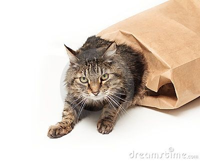 Cat out of the bag clipart black and white download clipart of cat out of the bag - Google Search | My Board | Cats ... black and white download