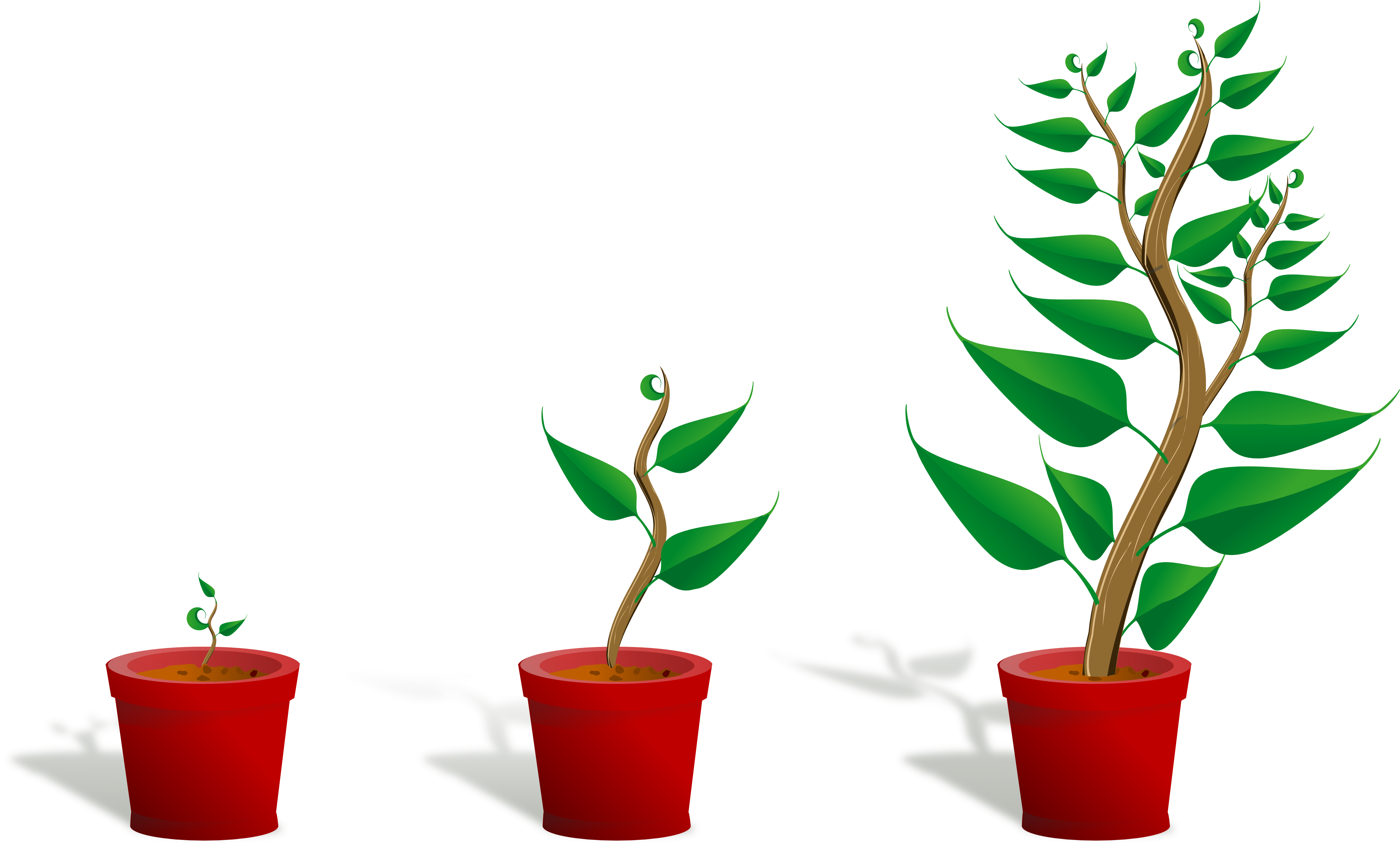 Cat tail plant clipart image royalty free stock 28+ Collection of Plant Grow Clipart | High quality, free cliparts ... image royalty free stock