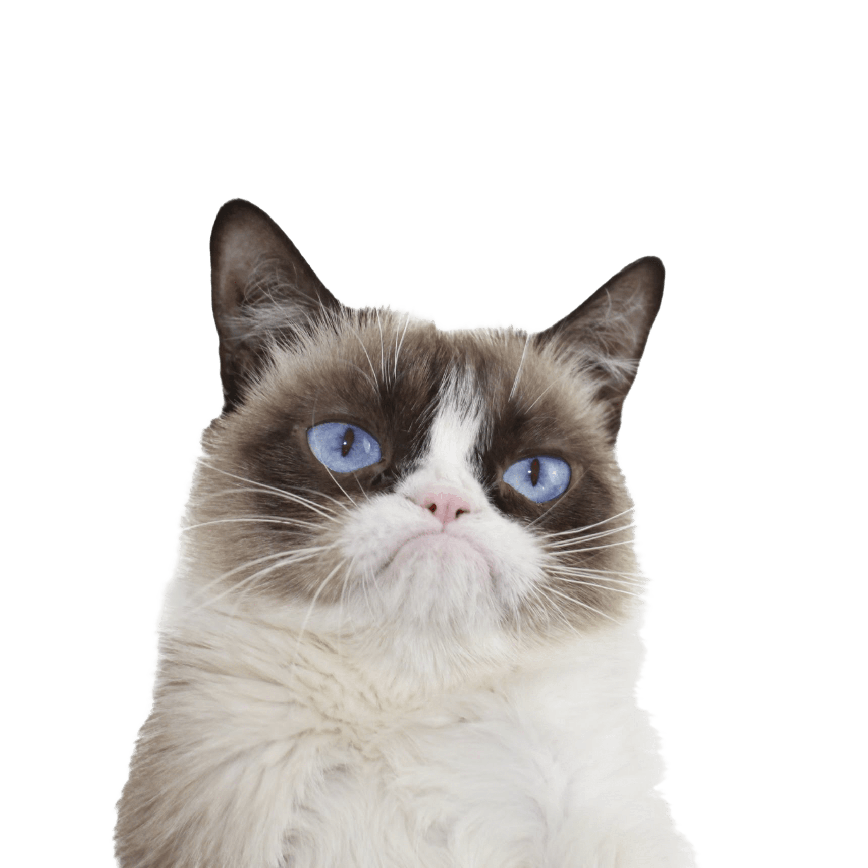 Cat with glasses clipart jpg Grumpy Cat Clipart Mad Cat Free collection   Download and share ... jpg
