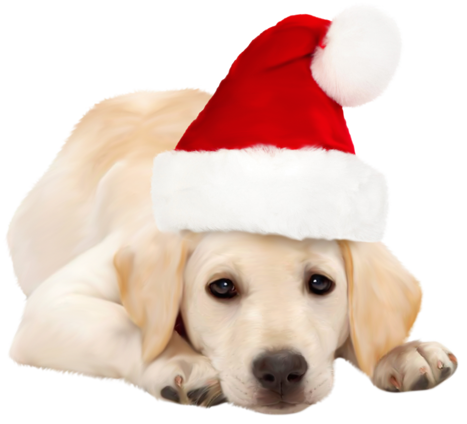 Santa dog clipart svg transparent 28+ Collection of Dog With Santa Hat Clipart | High quality, free ... svg transparent
