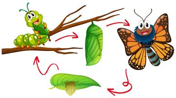 Caterpillar To Butterfly Free Vector Art - (143 Free Downloads) clip transparent