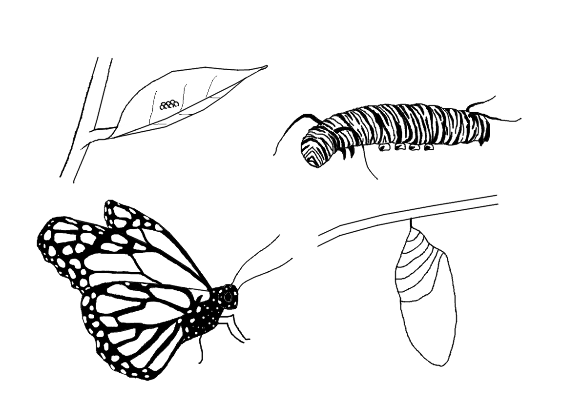Caterpillar Into Butterfly PNG Transparent Caterpillar Into ... jpg black and white download