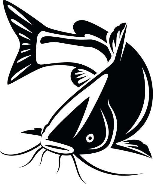 Cartoon Catfish - 415*450 - Free Clipart Download - Clipartimage #296369 jpg black and white library