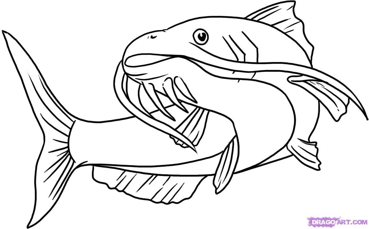 Catfish clipart free graphic transparent download Best Catfish Clip Art #601 - Clipartion.com graphic transparent download