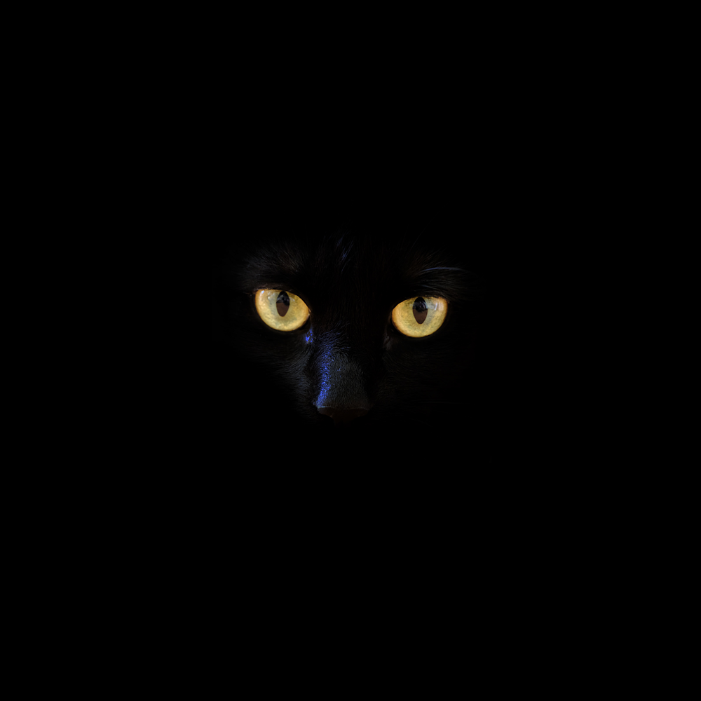 Cute black cat with green eyes clipart clipart library download 100+ Black Cat Pictures | Download Free Images on Unsplash clipart library download