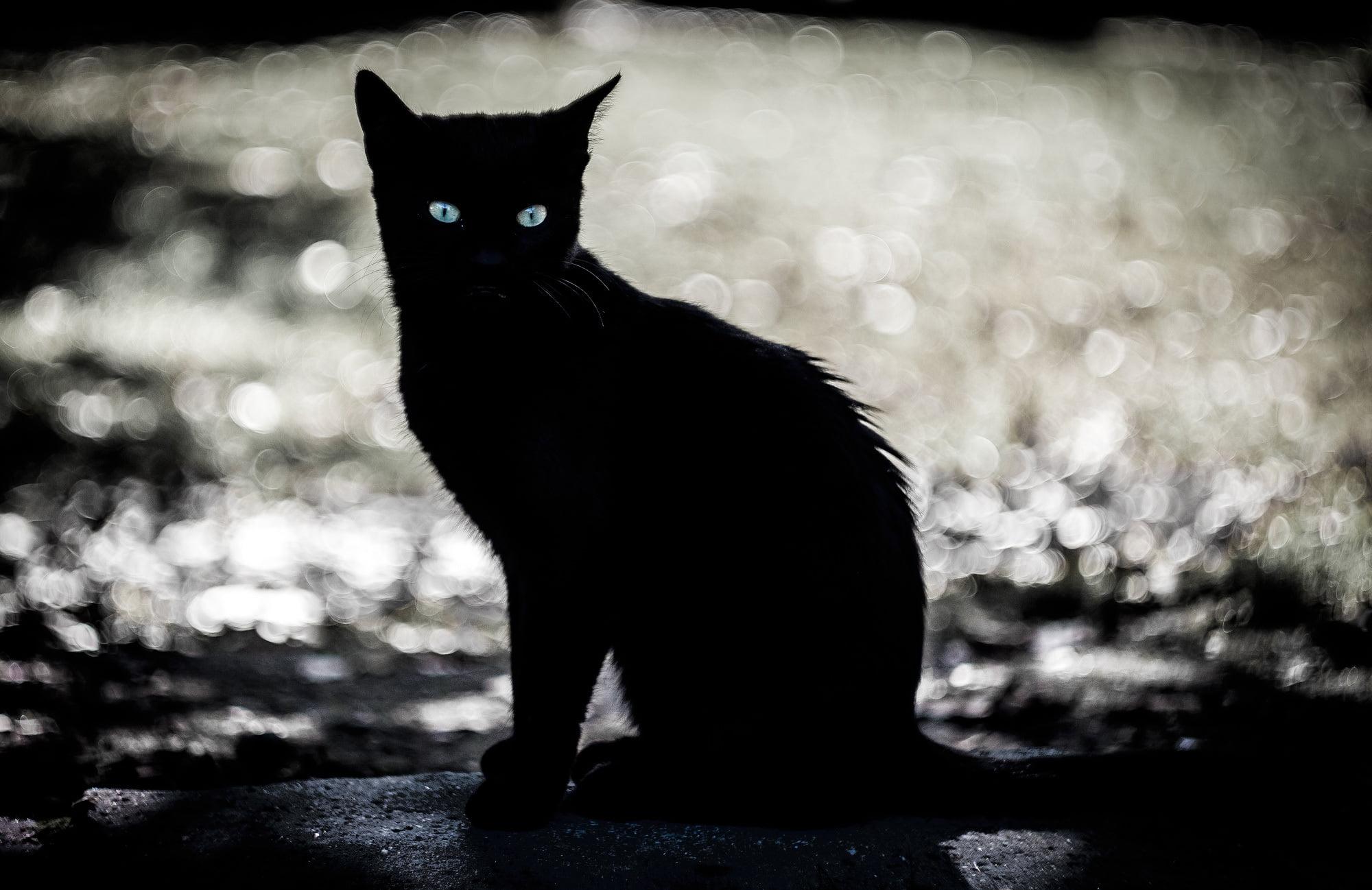 Cats eyes in the dark clipart svg library Black cat clip art, eyes, dark, animals, cat HD wallpaper ... svg library