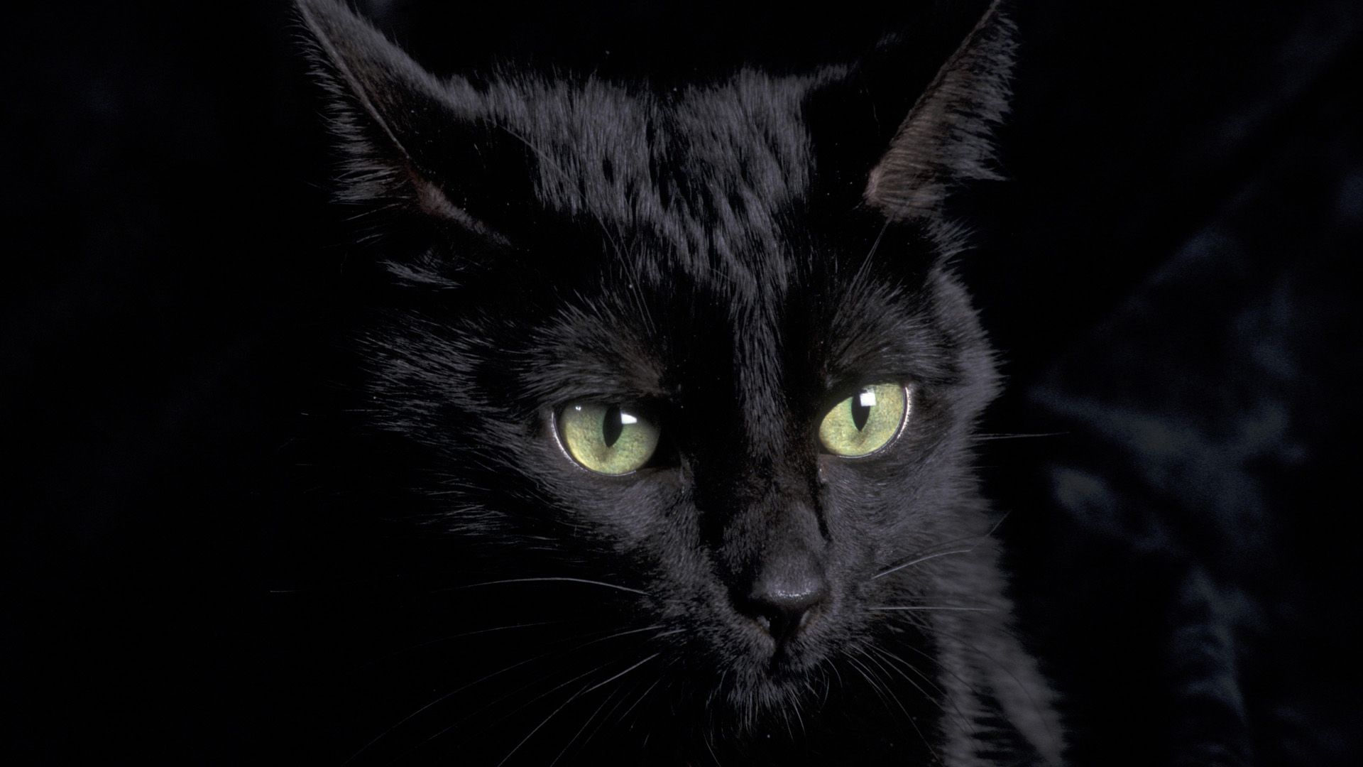 Black cat with green eyes wallpaper | Inky Dink | Cat wallpaper ... banner royalty free library