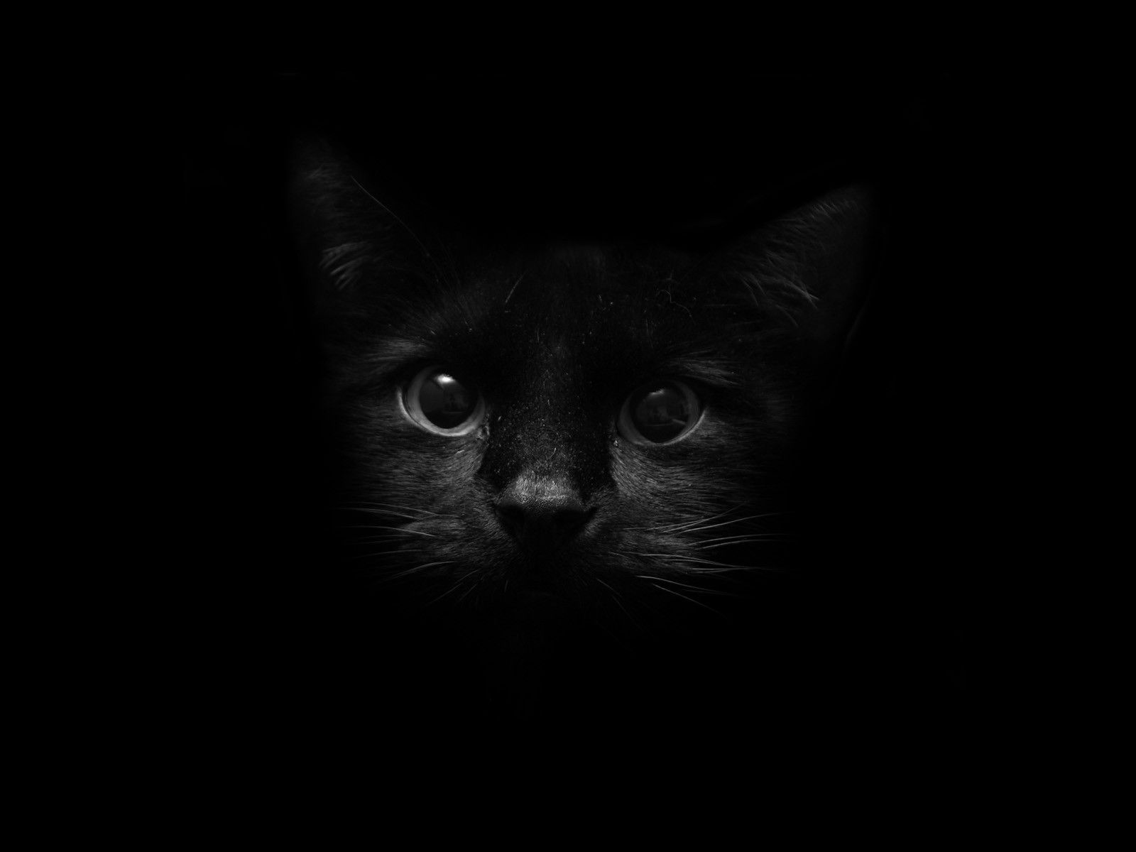 cat eyes in the dark | My Style | Cats, Cat wallpaper, Cute cats picture black and white library