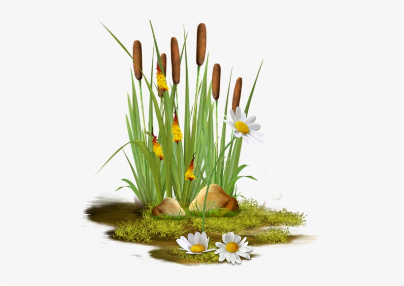Cattails - Clipart Pond Reeds Transparent - Free Transparent PNG ... picture royalty free