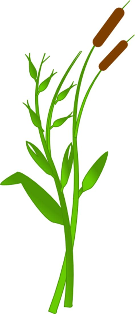Cattails Clipart | Free download best Cattails Clipart on ClipArtMag.com picture transparent stock