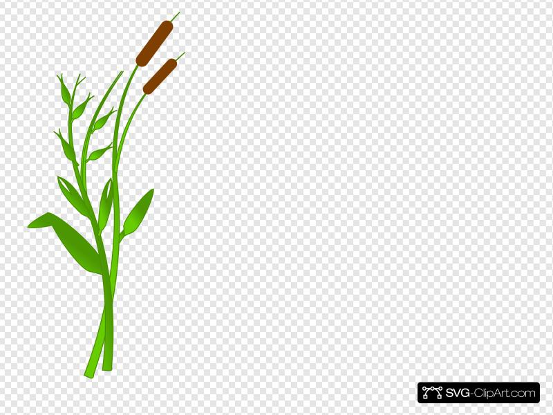 Cattails Clip art, Icon and SVG - SVG Clipart image free library
