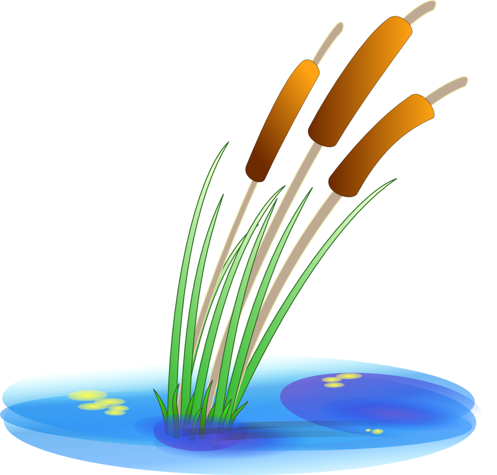 42+ Cattails Clipart | ClipartLook clipart free stock