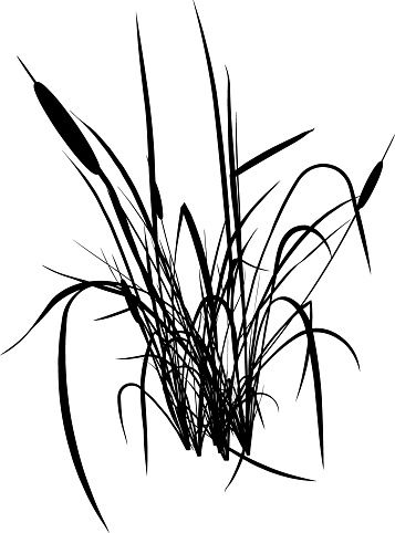 Cattails silhouette clipart png Silhouette Of Cattail Clip Art, Vector Images & Illustrations ... png