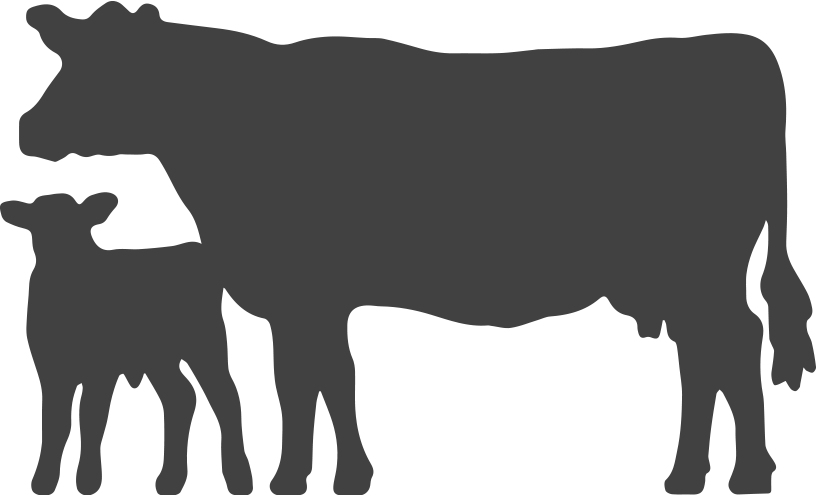 Cattle car clipart vector royalty free library Angus Cow Silhouette at GetDrawings.com | Free for personal use ... vector royalty free library