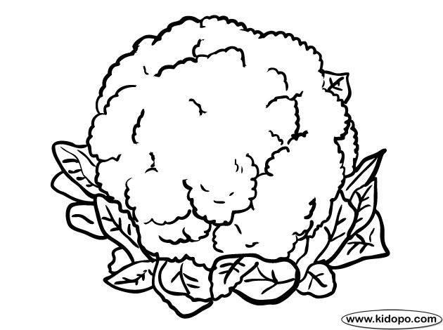 Cauliflower clipart black and white banner transparent stock Cauliflower paintings search result at PaintingValley.com banner transparent stock