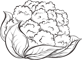 Cauliflower clipart black and white graphic freeuse download Cauliflower Clipart Black And White (87+ images in Collection) Page 2 graphic freeuse download