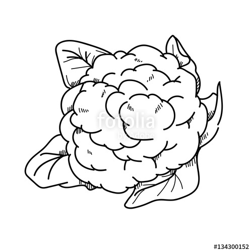 Cauliflower clipart black and white graphic royalty free library Freehand drawing illustration Cauliflower.\