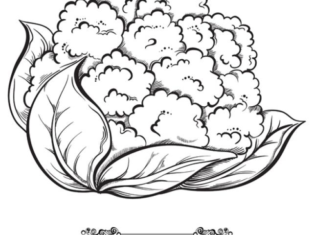 Cauliflower clipart black and white svg library stock Free Cauliflower Clipart, Download Free Clip Art on Owips.com svg library stock