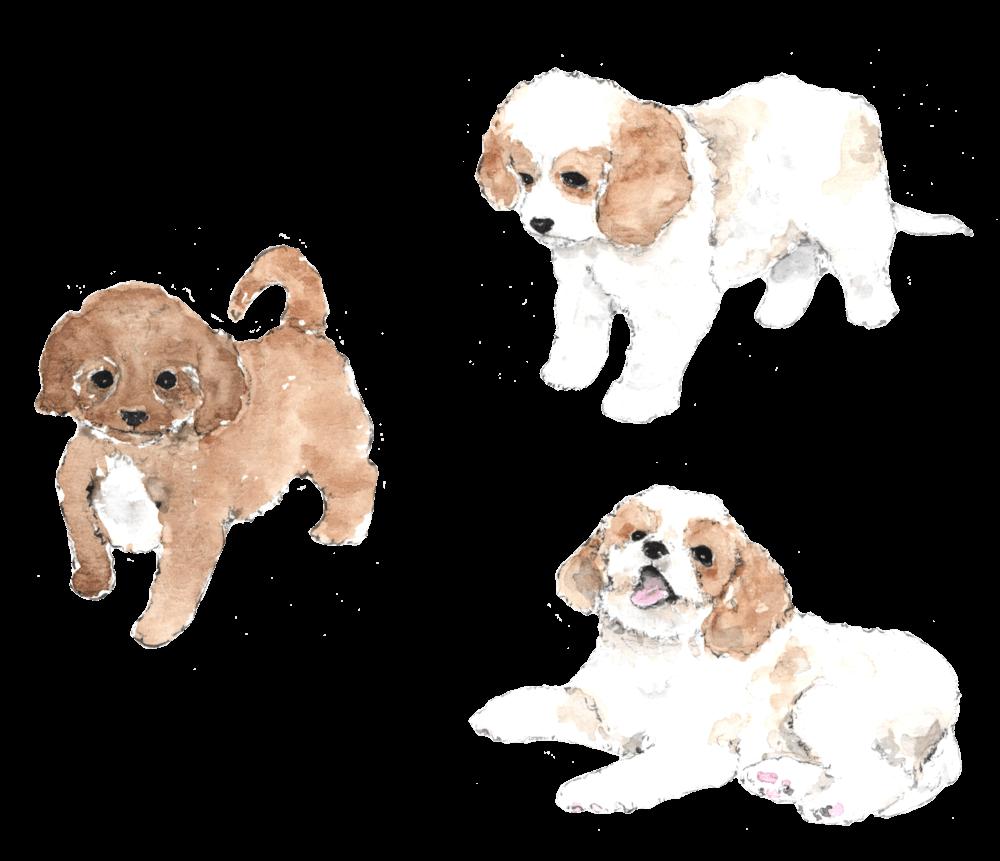Cavachon Puppy Cliparts - Cliparts Zone clipart free
