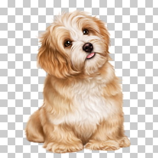 132 cavachon PNG cliparts for free download | UIHere png free stock
