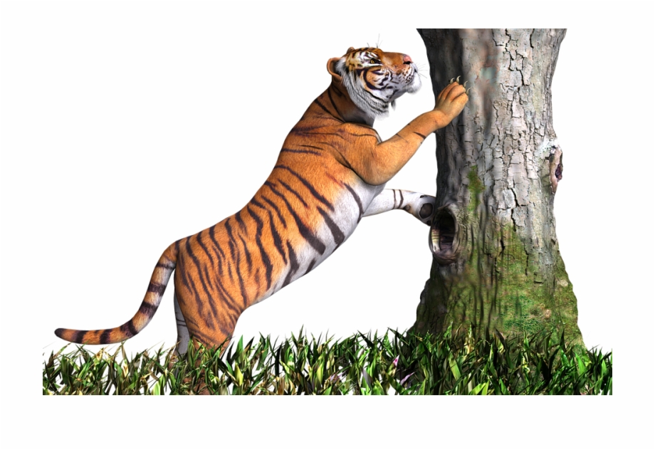Cb background clipart svg library library Tiger Climb On Tree Hd Picture - Cb Background Tiger Png Free PNG ... svg library library
