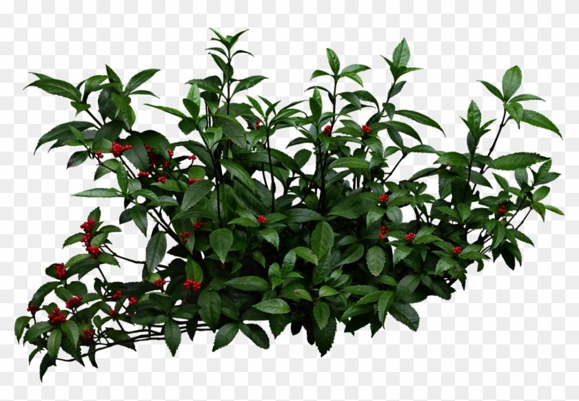 Shrub Bushes Clipart Mango Tree - Shrubs Png, Transparent Png ... banner transparent stock
